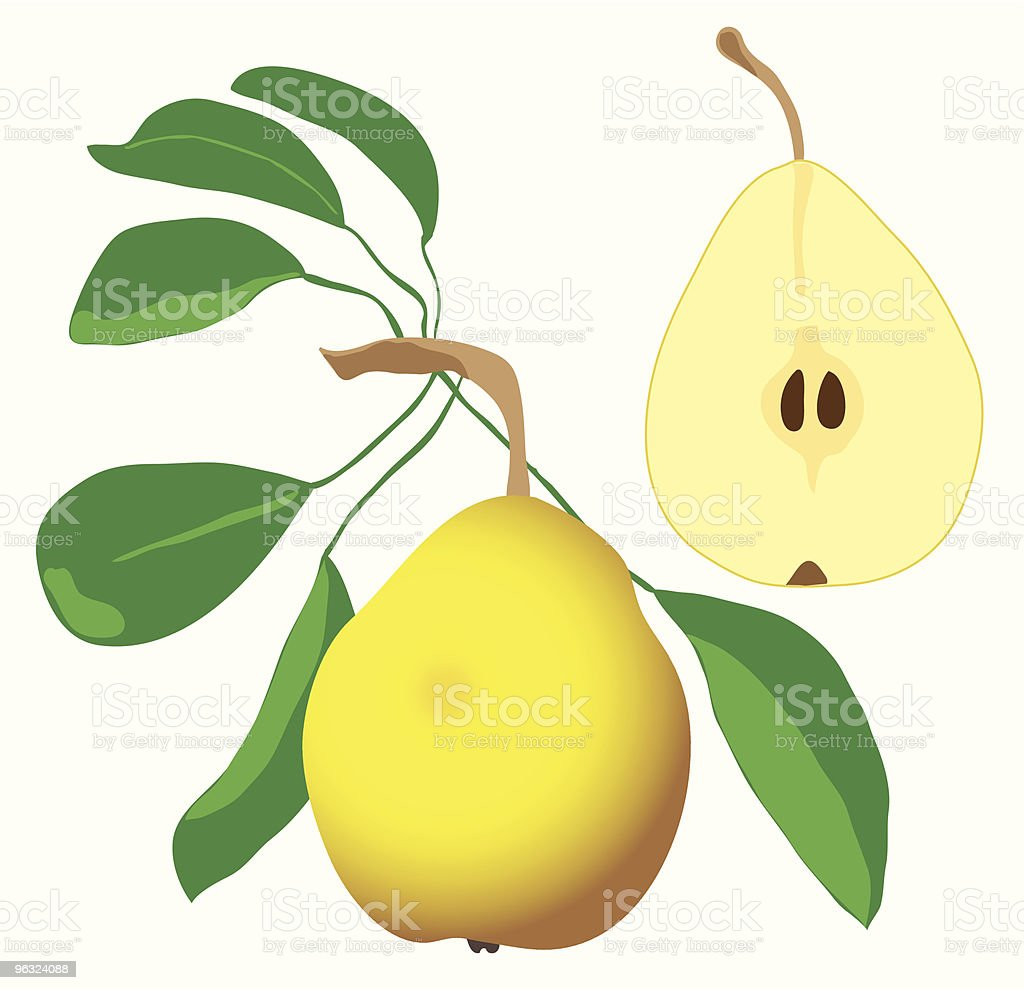 pears and leaves royalty-free stock vector art