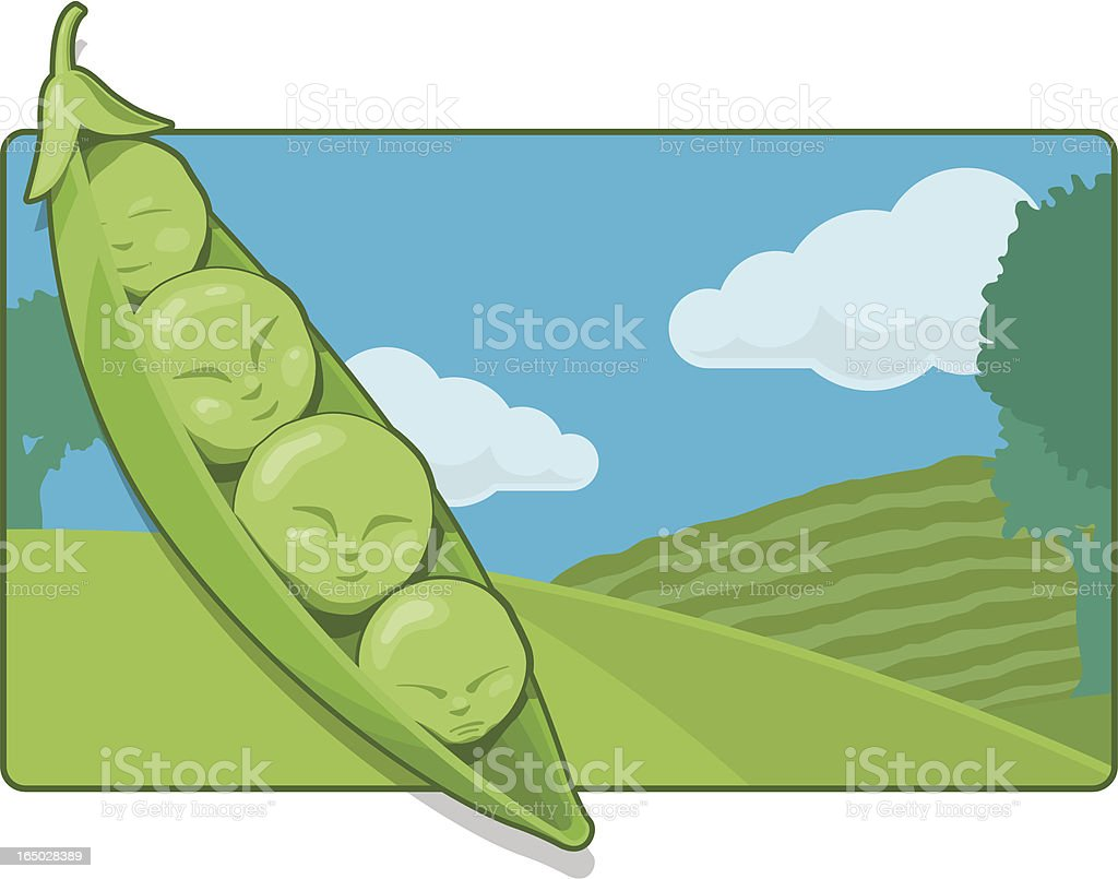 Peas in a Pod (vector and raster) royalty-free stock vector art