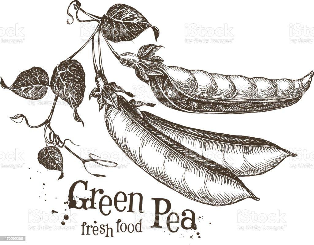 peas vector logo design template. fresh vegetables or food icon vector art illustration
