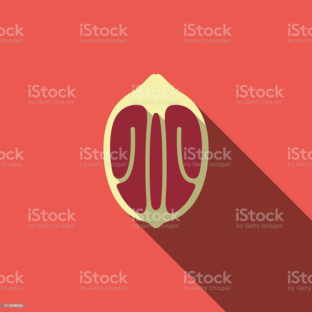 Pecan food and drink flat icon series vector art illustration
