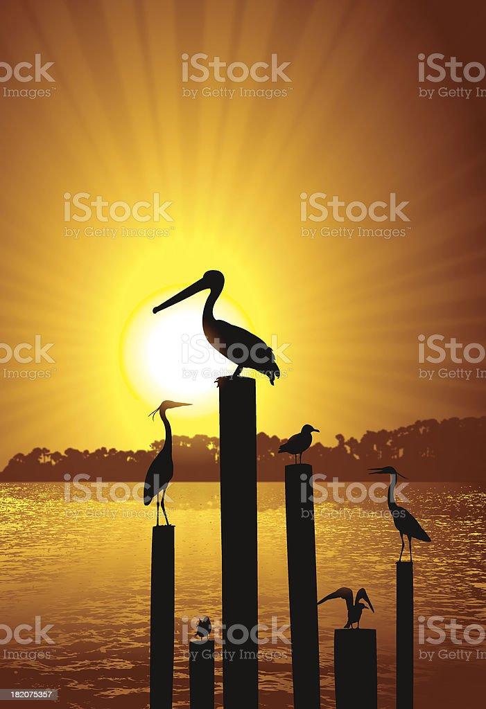 Pelican, Crane and Seagull Background Burst vector art illustration