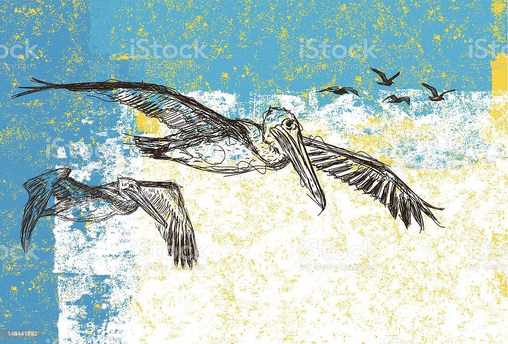 Pelicans and Seagulls vector art illustration
