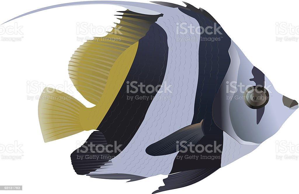 Pennant coralfish royalty-free stock vector art