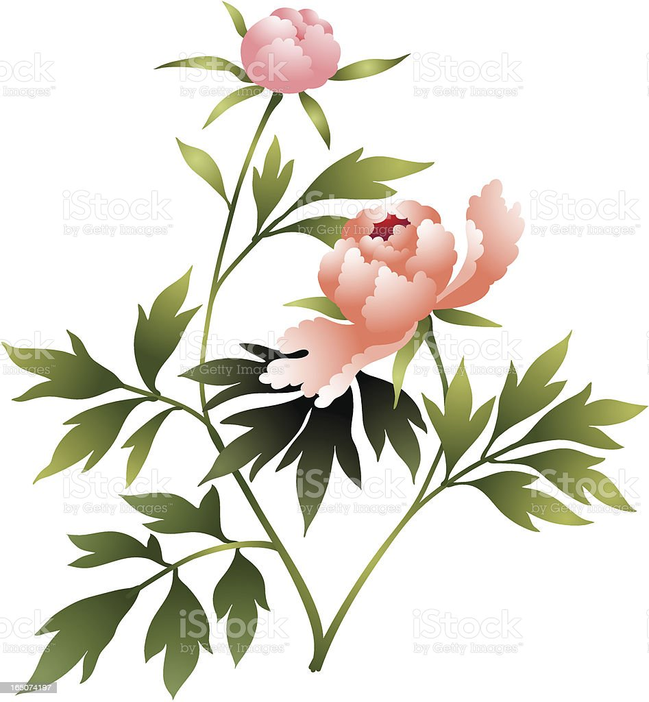 Peony flower ilustration royalty-free stock vector art