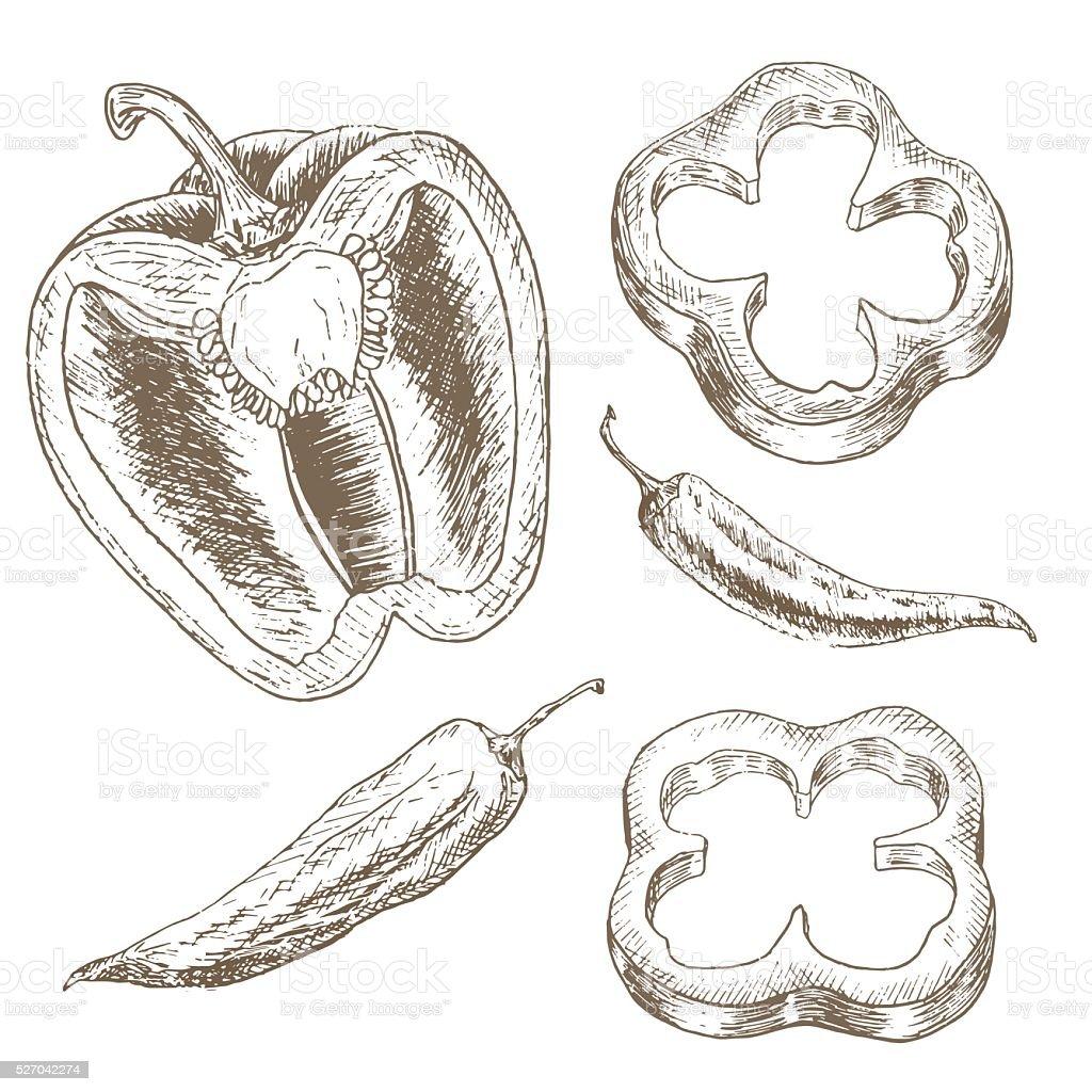 Pepper slice  and chili vector art illustration