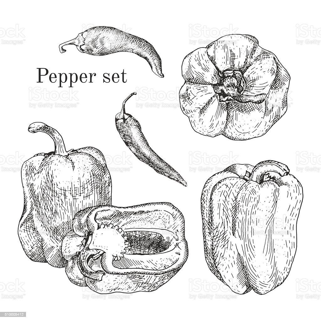 Peppers ink sketches set vector art illustration