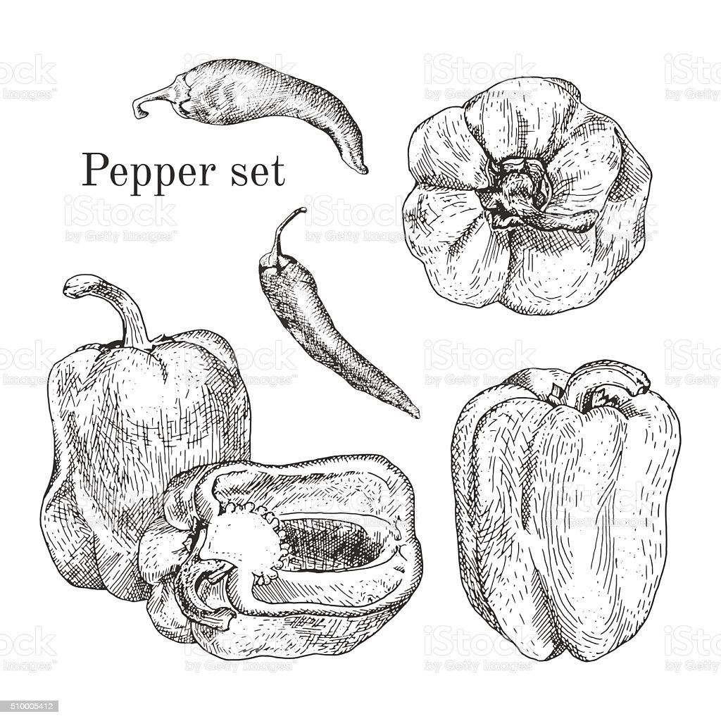 Peppers ink sketches set vector art illustration