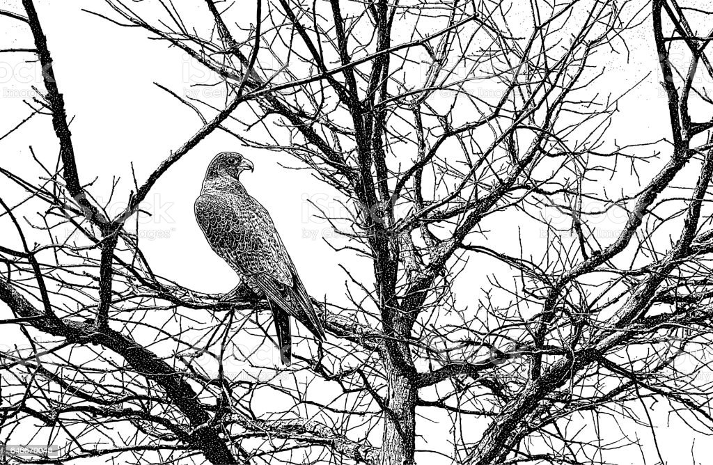 Peregrine Falcon perched in tree vector art illustration