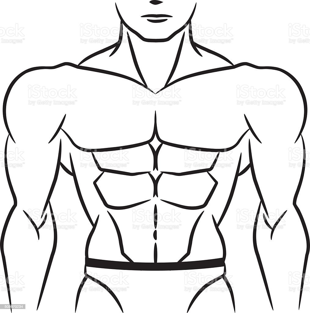 Perfect abdominal muscles outline vector art illustration