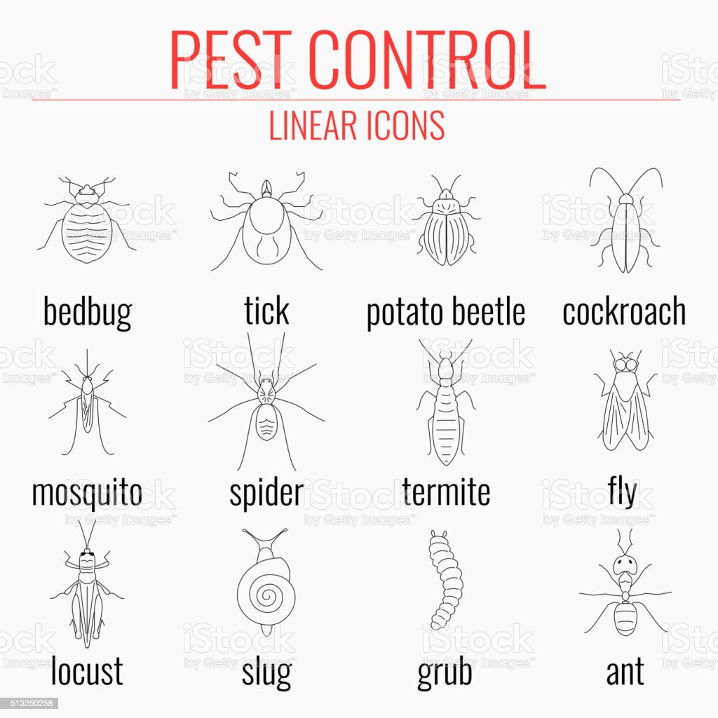 Pest control insect set vector art illustration