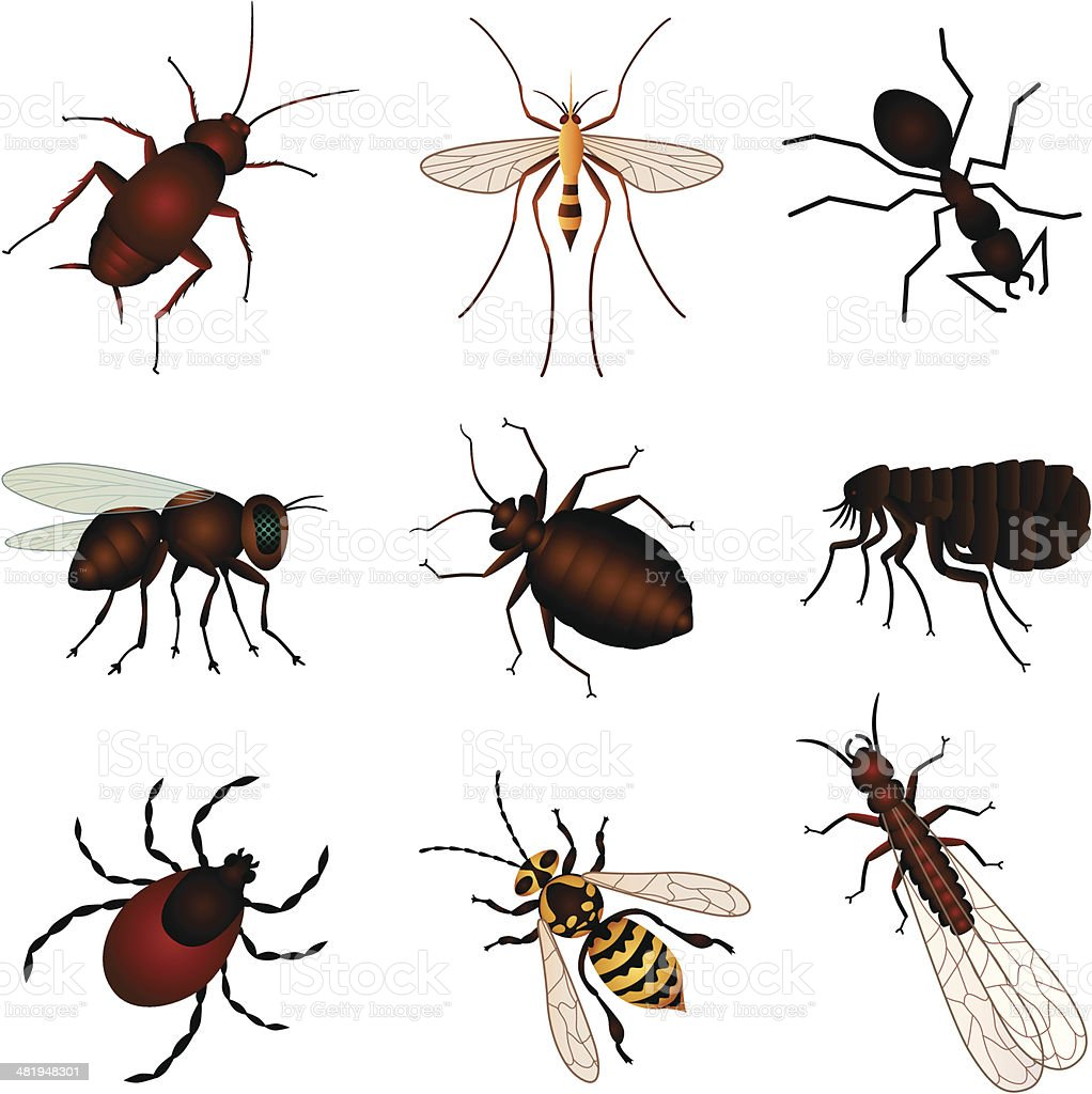 pest insects vector art illustration