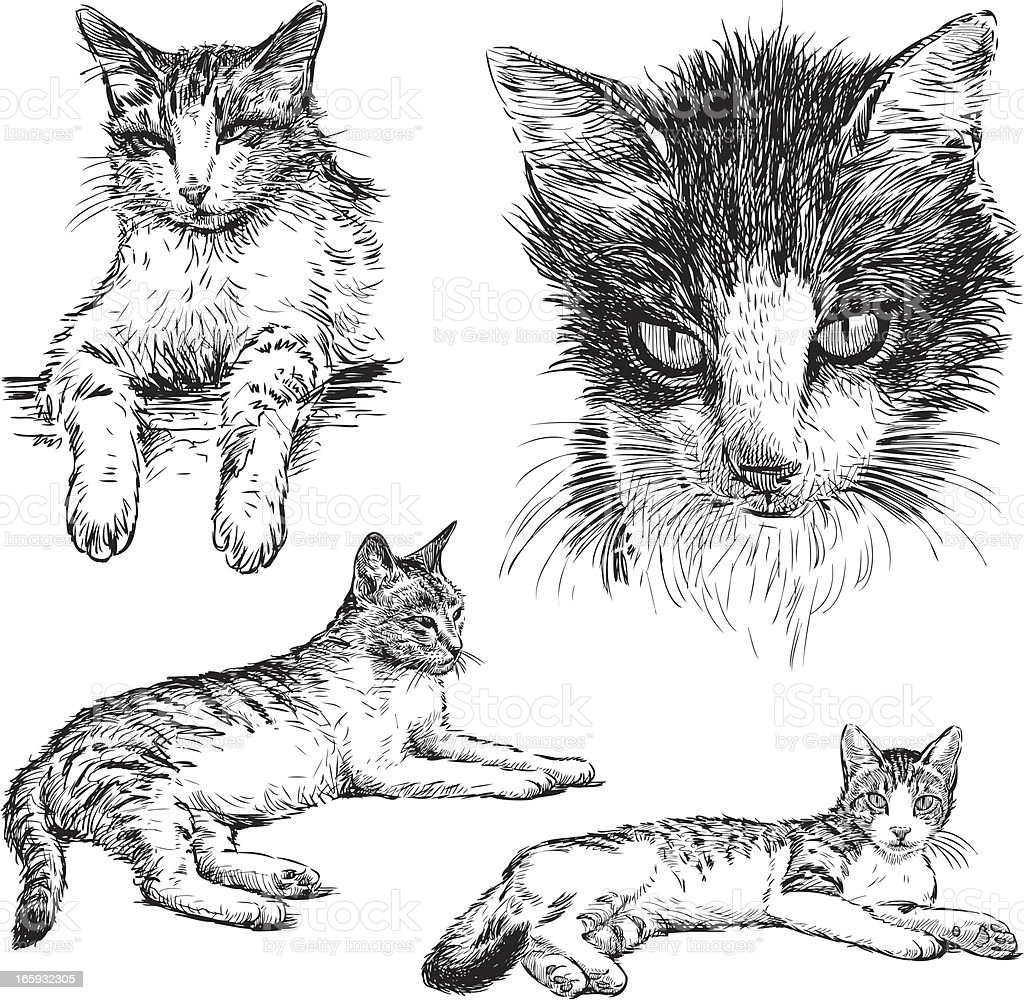 pet cat vector art illustration