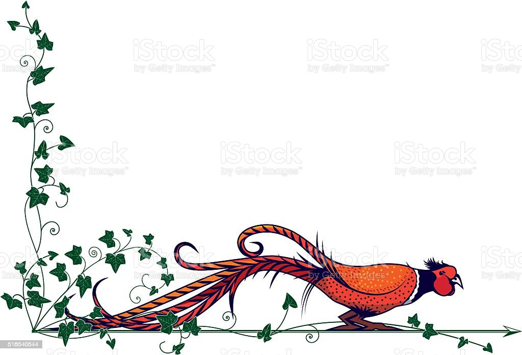pheasant and ivy vector art illustration