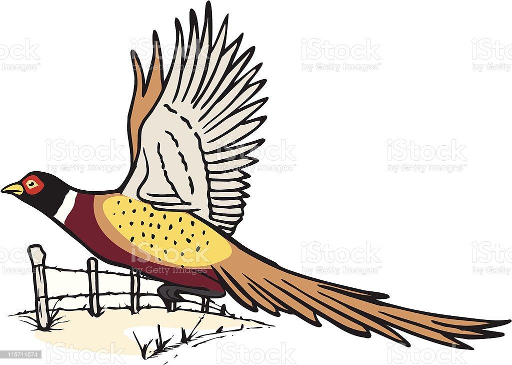 Pheasant in flight vector art illustration