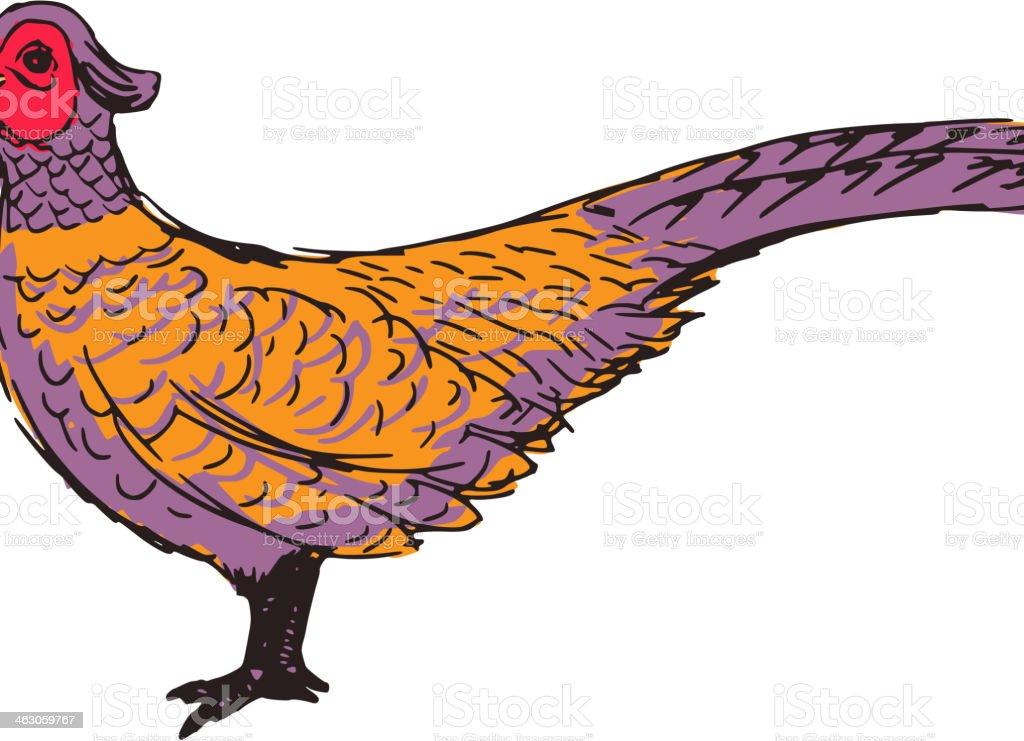 pheasant vector art illustration