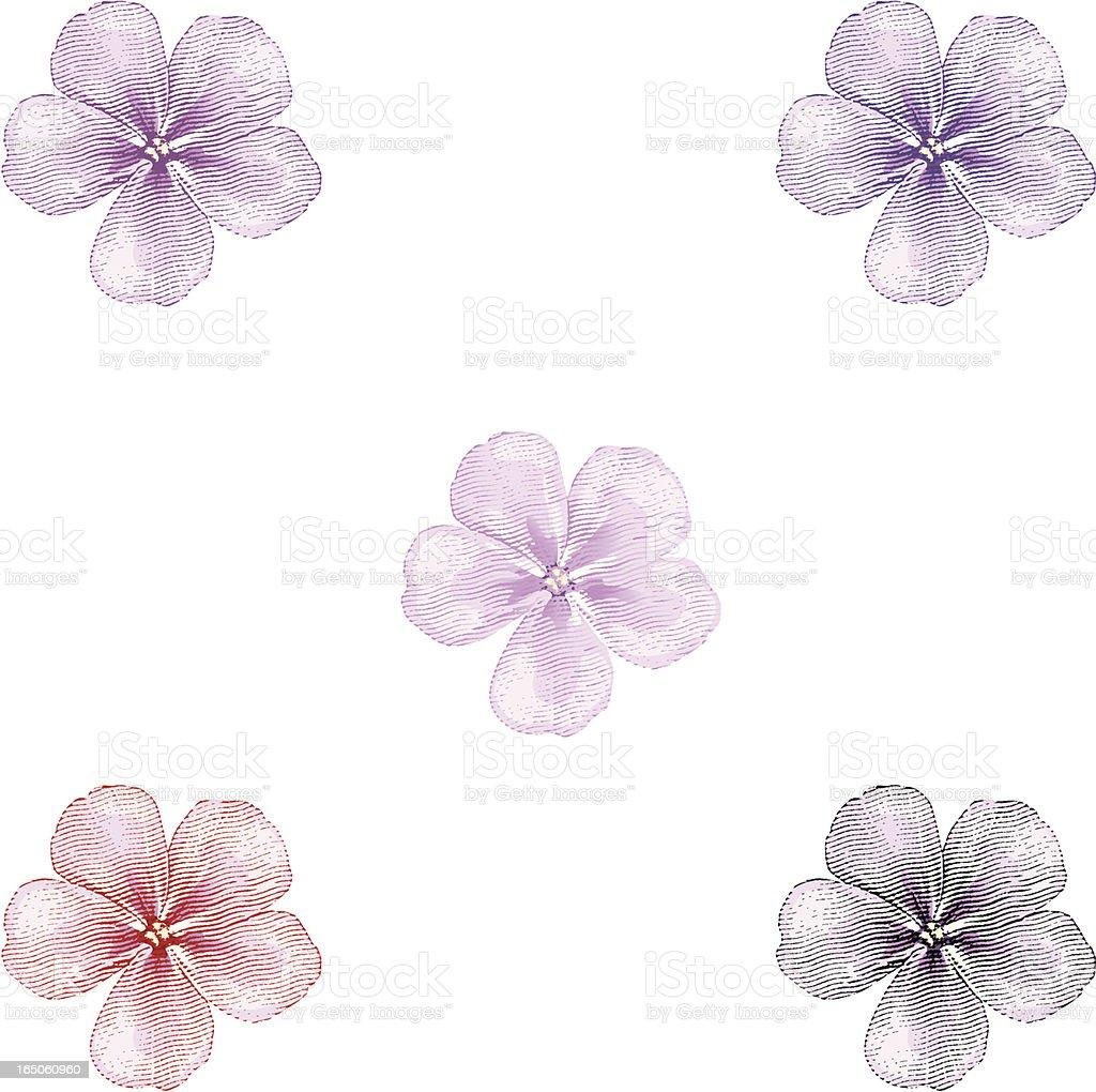 Phlox Blossoms royalty-free stock vector art