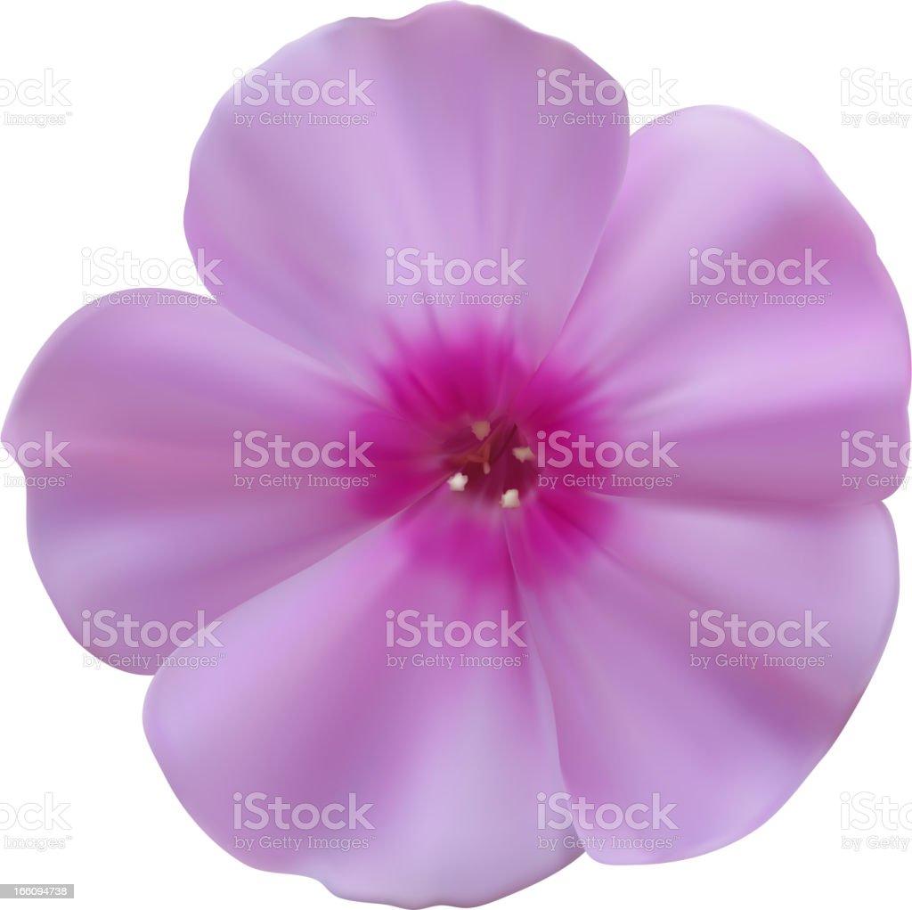 Phlox flowers royalty-free stock vector art