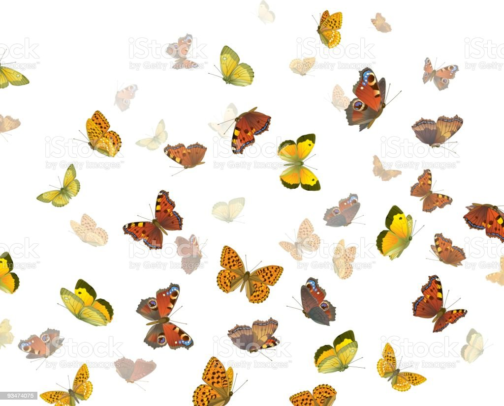 Photo of red, orange, and yellow butterflies royalty-free stock vector art
