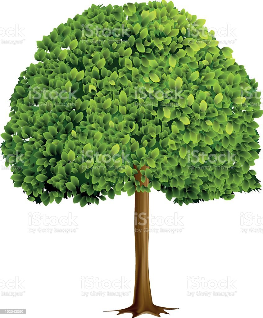 Photorealistic illustration of tree with green leaves vector art illustration