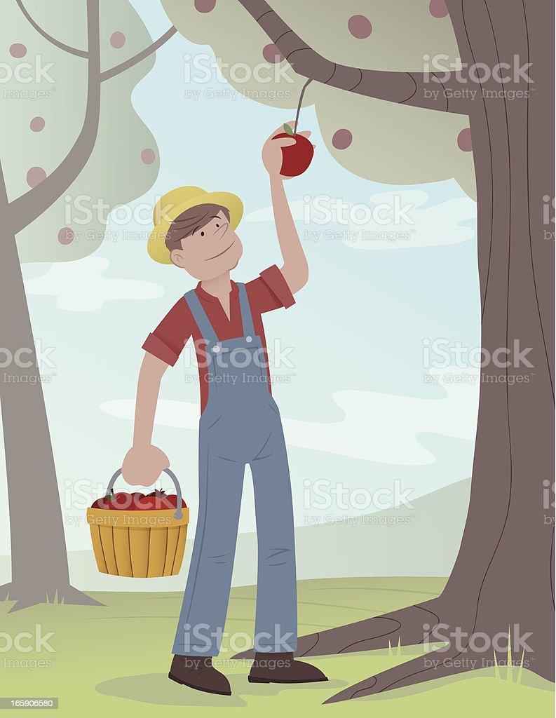 Picking Apples vector art illustration