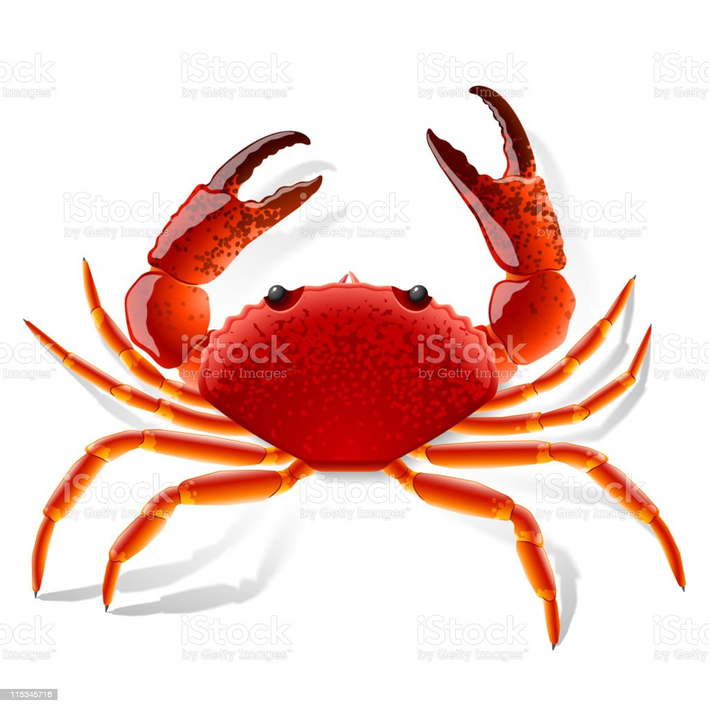 Picture of a red crab with claws vector art illustration