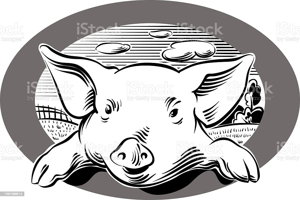 pig in oval frame royalty-free stock vector art