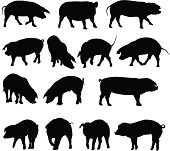 Pig silhouette collection.