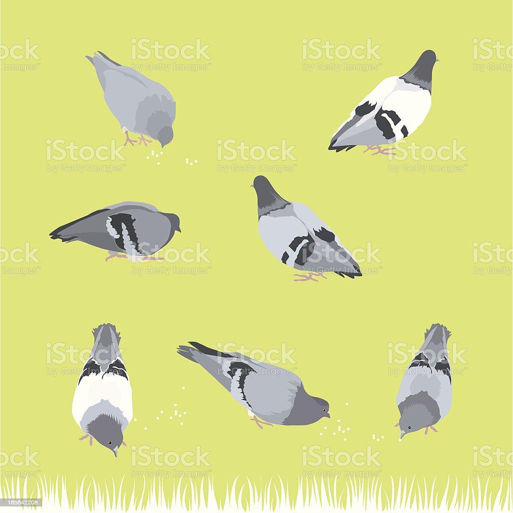 Pigeon Bird -Design Elements royalty-free stock vector art