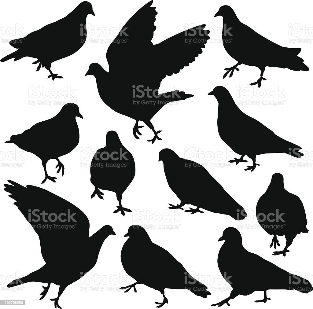 Pigeon Silhouettes royalty-free stock vector art
