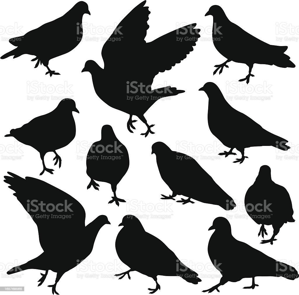 Pigeon Silhouettes vector art illustration