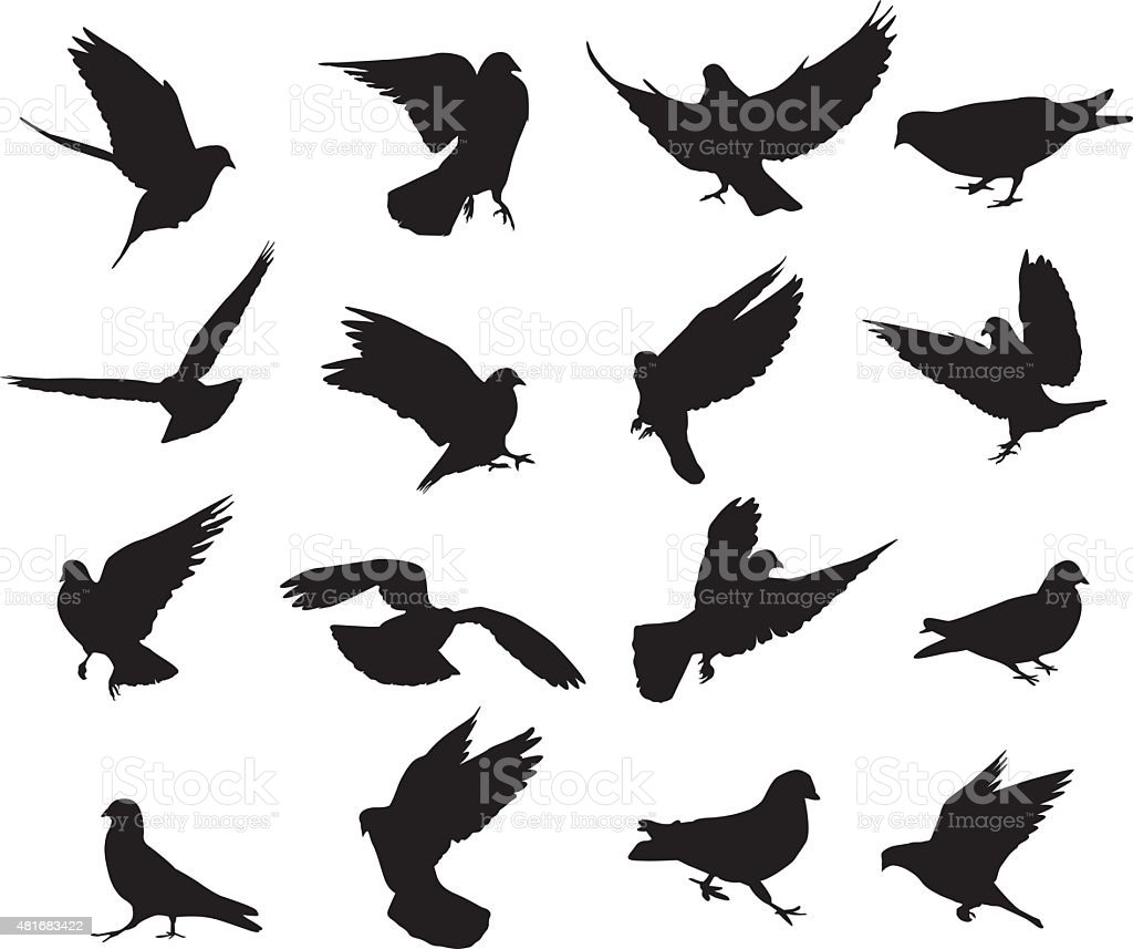 Pigeon silhouettes vector art illustration
