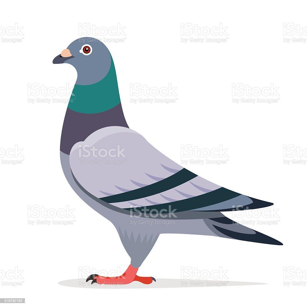 Pigeon vector character vector art illustration