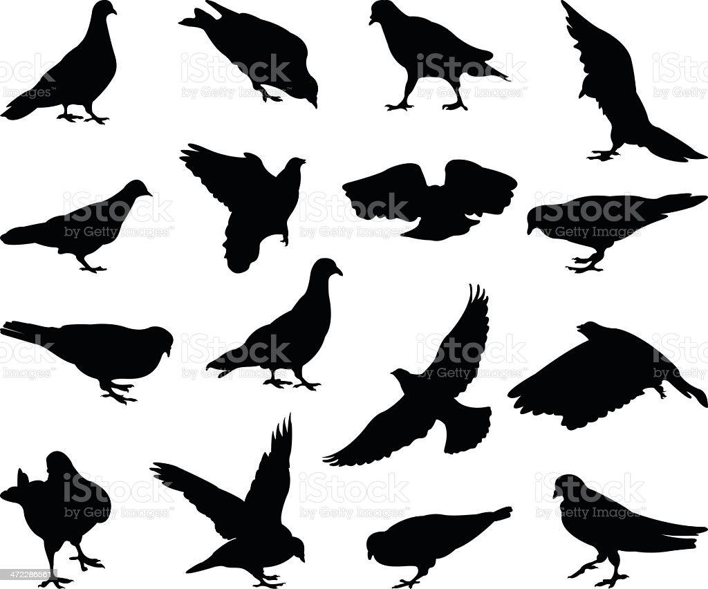 pigeons silhouette vector art illustration