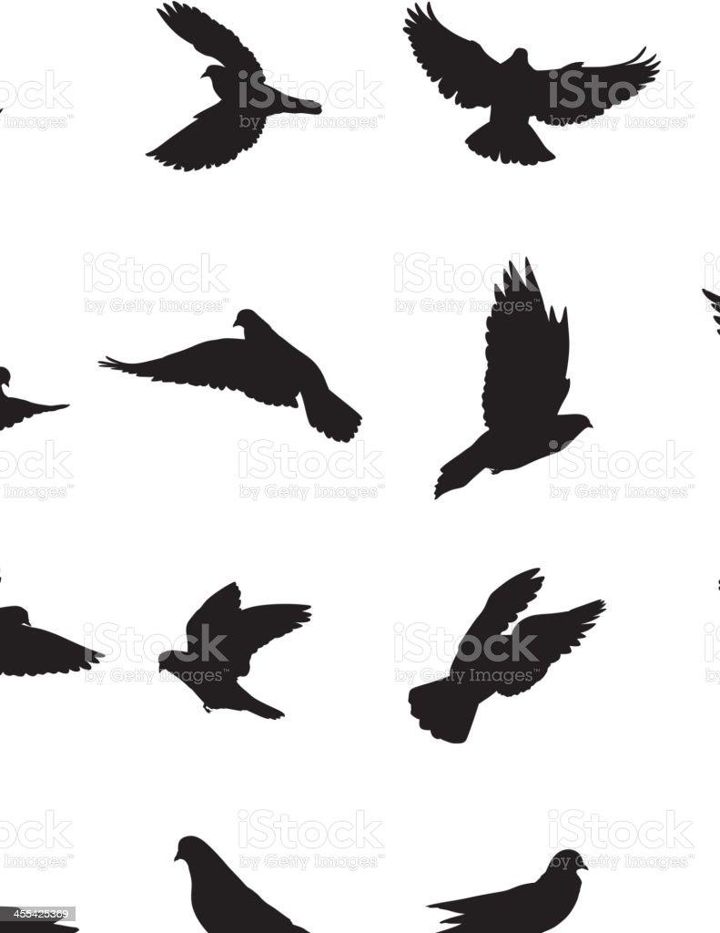 Pigeons vector art illustration
