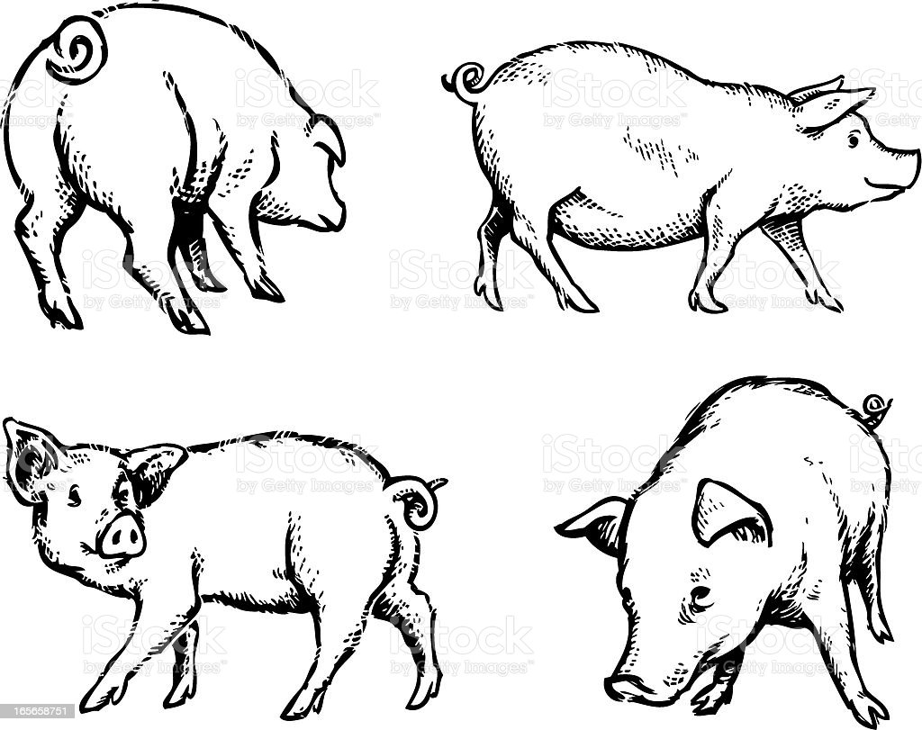 Pigs Illustration royalty-free stock vector art