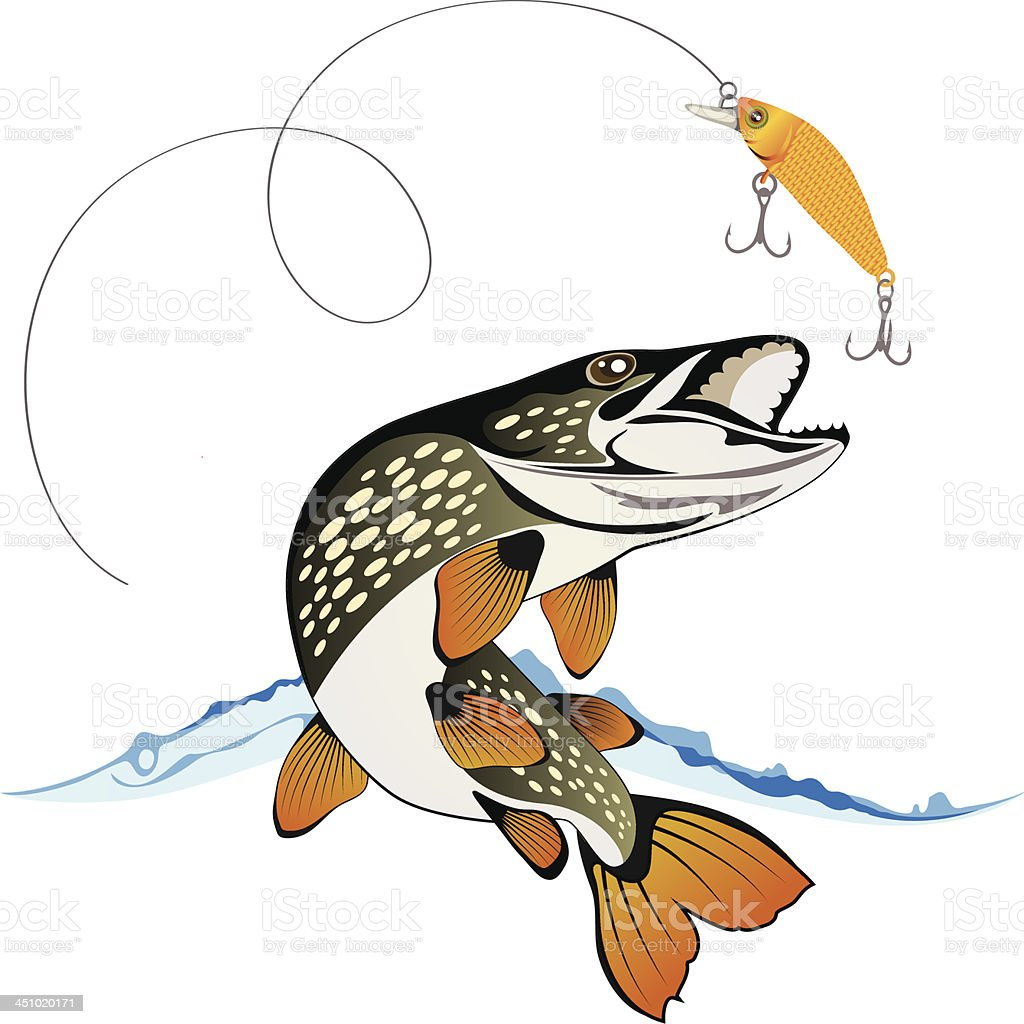 Pike and fishing lure, vector illustration vector art illustration