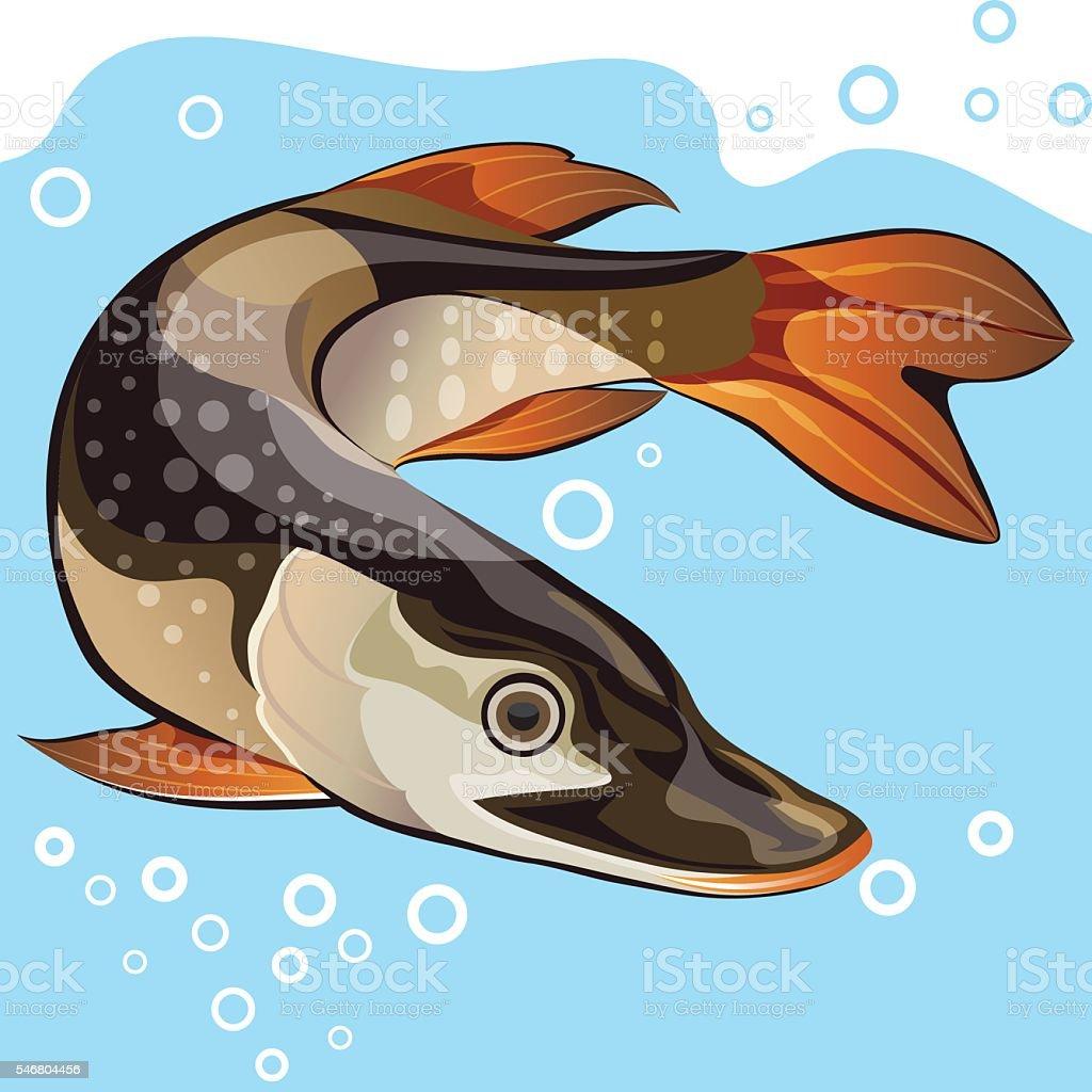 Pike underwater, vector illustration vector art illustration