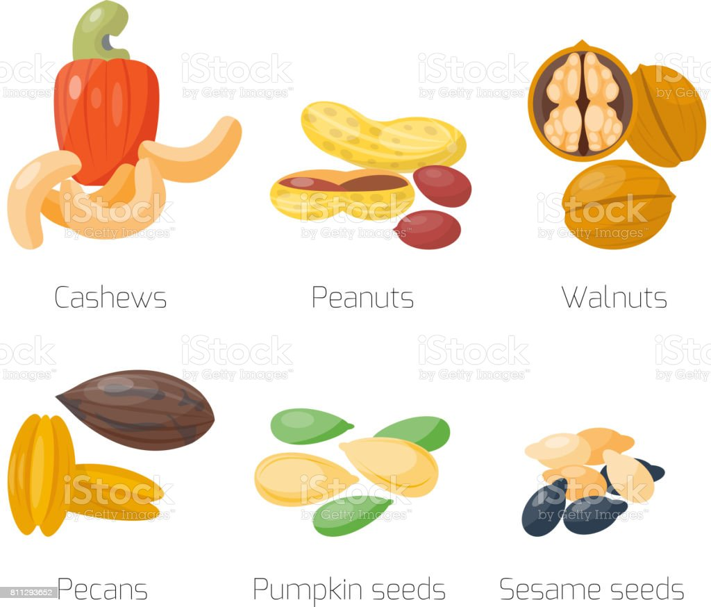 Piles of different nuts peanut walnut cashew pecans tasty seed vegetarian nutrition vector illustration vector art illustration