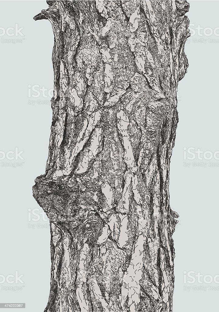 Pine Bark vector art illustration