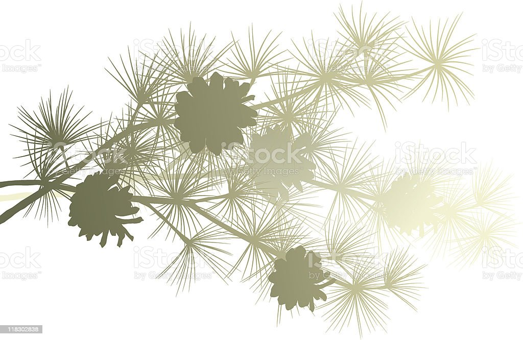 Pine branch vector art illustration