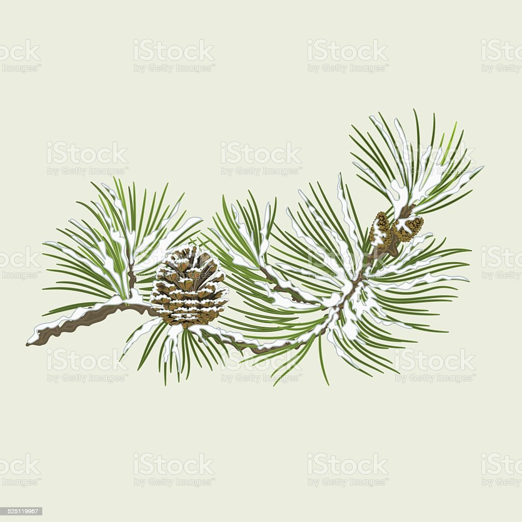Pine branch with snow and pine cone christmas theme vector vector art illustration