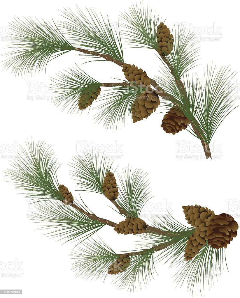 Pine Branches Twigs with Pinecones Vector clipart Illustration royalty-free stock vector art
