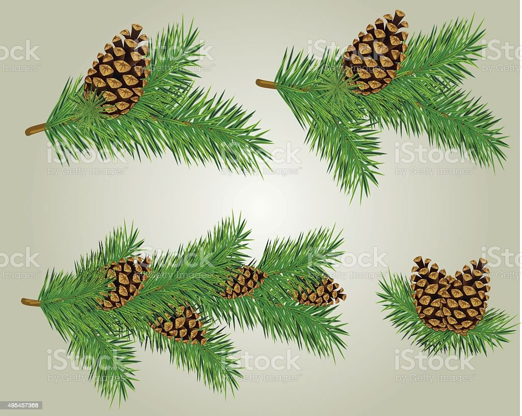 Pine Cone on Fir Branch vector art illustration