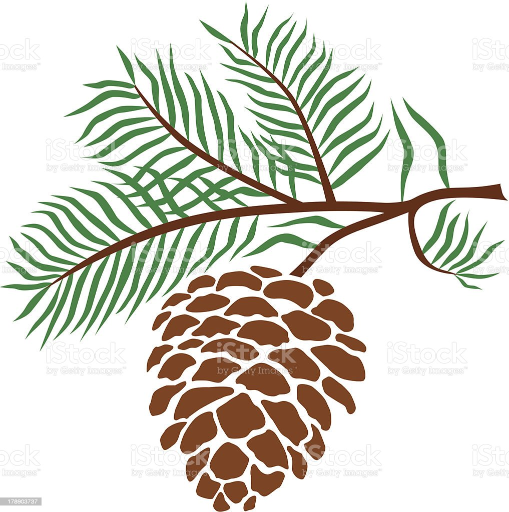 pine cone vector art illustration