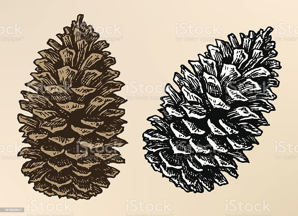 Pine Cone Illustration Pine Cone Clip Art, Ve...