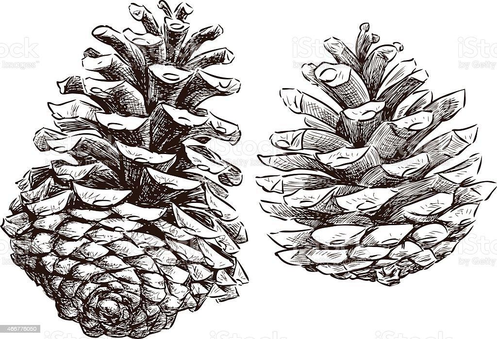 pine cones vector art illustration