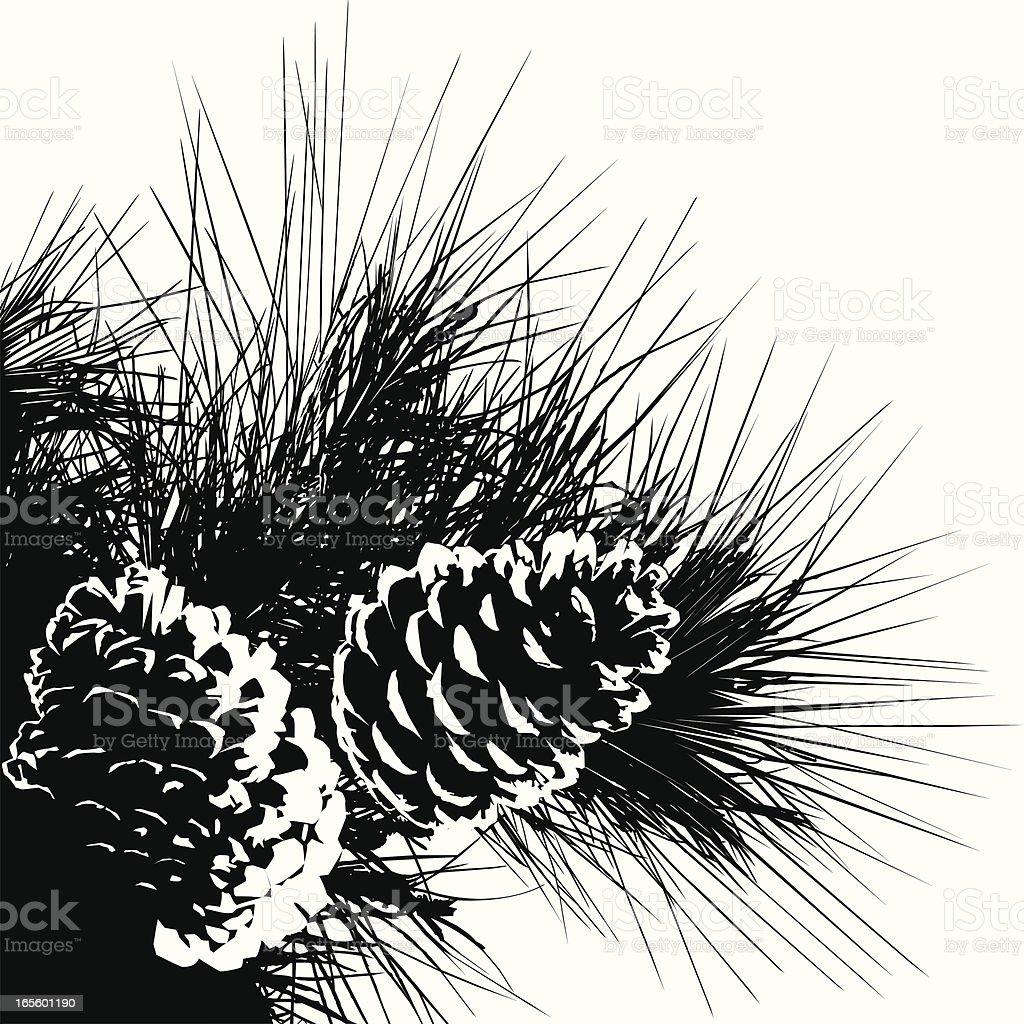 Pine Cones-Design Elements vector art illustration