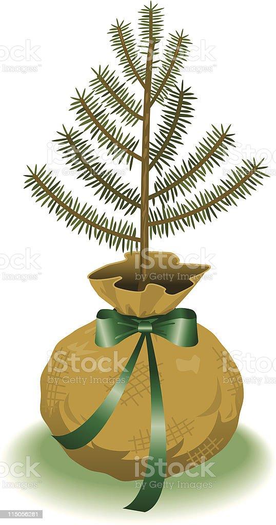 Pine sapling royalty-free stock vector art