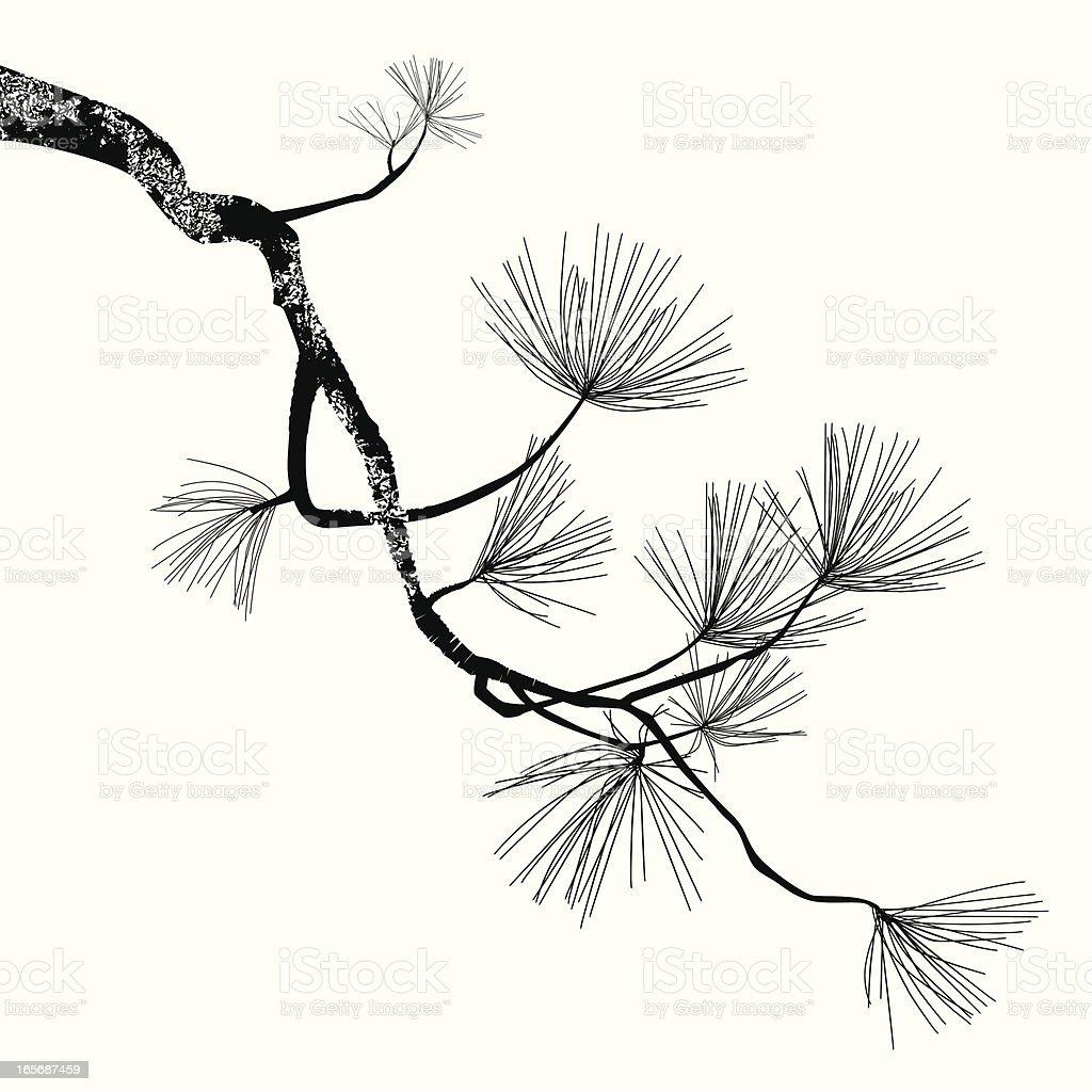 Pine Tree Branch vector art illustration