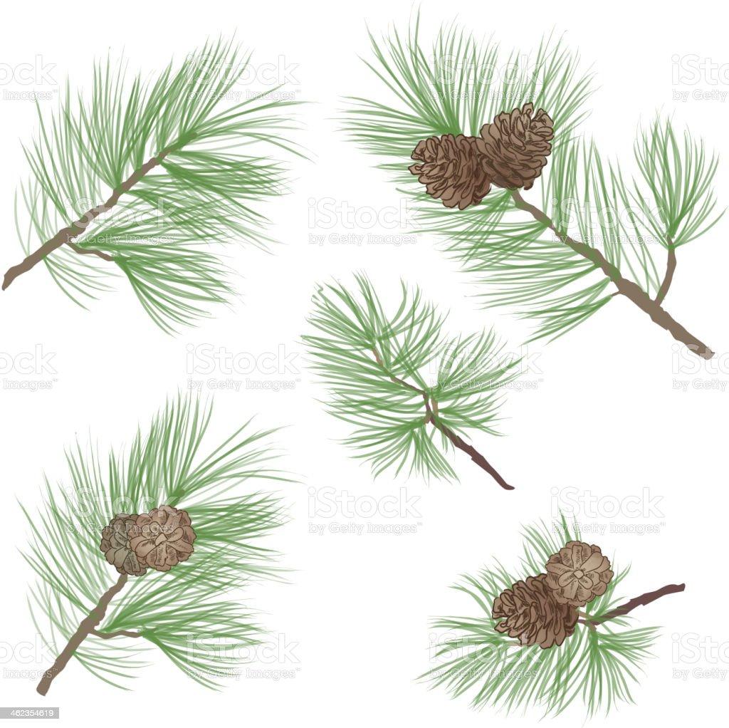 Pine tree branch with cone set. Vector illustration vector art illustration